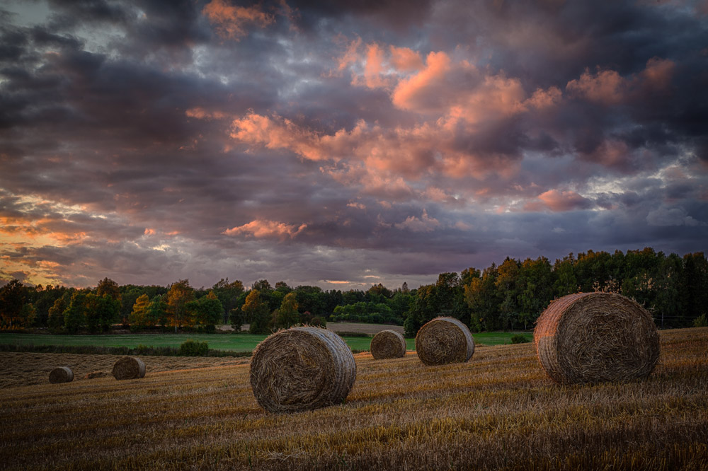 August evening in Ås, Norway. Photo: John Einar Sandvand